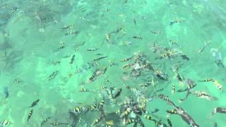 Orpheus Island Australia  city pictures gallery : Fish at Yanks Jetty Orpheus Island North Queensland Australia