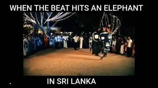 Not only lions can sing... elephants can dance Recorded by DU Recorder – Screen recorder for Android.