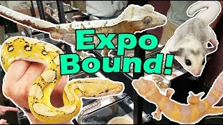 Behind the Scenes at the Eau Claire Exotic Pet Expo! by Snake Discovery