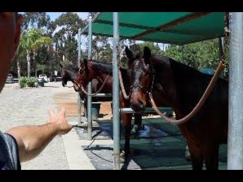 MEET THE EDI HORSES (видео)