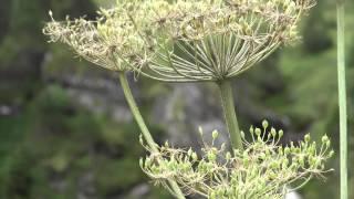Clip sur le site de Gavarnie dans les Hautes Pyrénées. Site classé au patrimoine de l'Unesco.