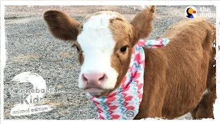 Family Brings Baby Cow Into Their Home During Hurricane | The Dodo: Comeback Kids S02E01 by The Dodo