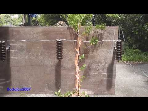 Tree branch touching a 22000 Volts power line