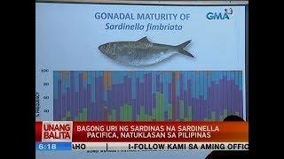 Video UB: Bagong uri ng sardinas na Sardinella Pacifica, natuklasan sa Pilipinas MP3, 3GP, MP4, WEBM, AVI, FLV Maret 2019