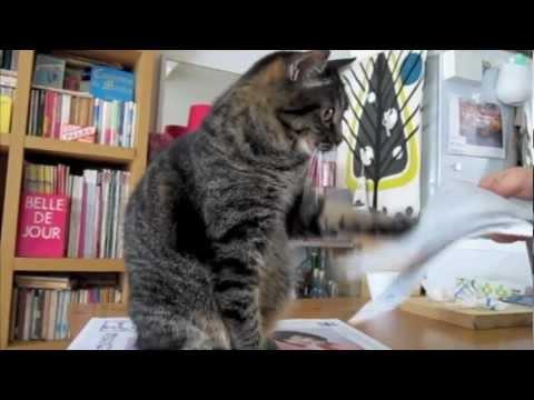 WEIRD CAT VIDEO: Warning! This Is REALLY Weird