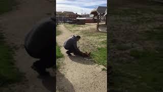Pies z depresją spędził samotnie 2 lata w schronisku! Pewnego dnia poczuł w powietrzu znajomy zapach!