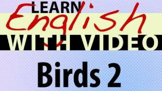 Learn English With Video - Birds 2