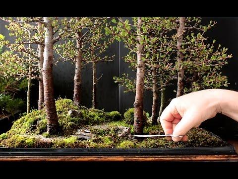 The Bob Ross of Bonsai Makes a Larch Bonsai Forest