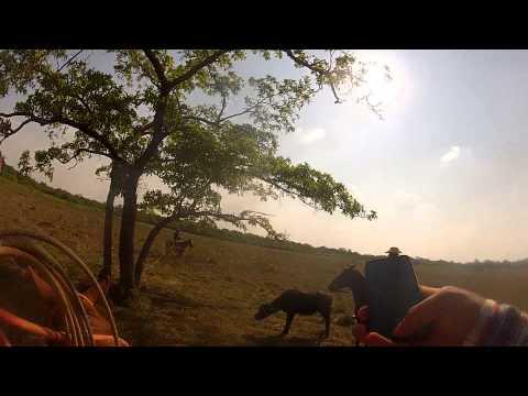 Captura de bufalo Nova Crixas