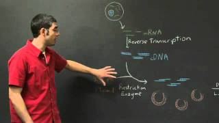 Transformation And Protein Expression | MIT 7.01SC Fundamentals Of Biology