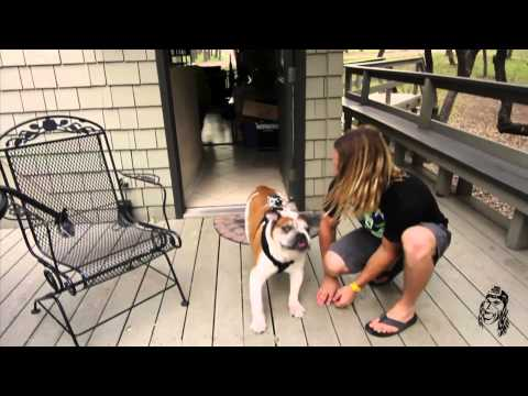 how to fasten dog harness
