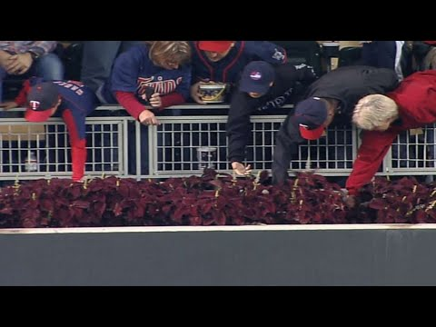 Video: Fans search for Thome's 607th home run ball at Target Field