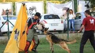 Köpek Eğitimi videosunun kapak resmi