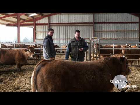 Réalisation Films Vidéo Elevage Pointage veaux race Parthenaise  production viande bovine