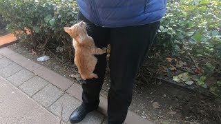 Cute kittens climbing on me
