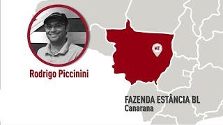 MT - Canarana - Rodrigo Piccinini