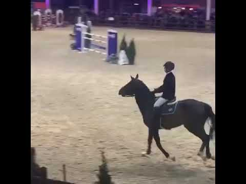 Etoile dubble clear 2nd round Pavo stallion competition