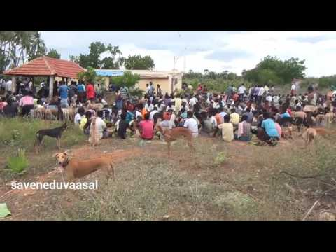 Video Kanni Dogs And our Family members Get Together party download in MP3, 3GP, MP4, WEBM, AVI, FLV January 2017