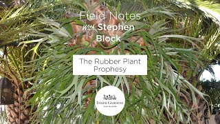 Video Inner Gardens Field Notes - How Did I Get Here: Rubber Plant Prophesy MP3, 3GP, MP4, WEBM, AVI, FLV April 2019