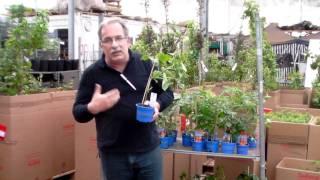 #349 Veredelte Gemüsepflanzen