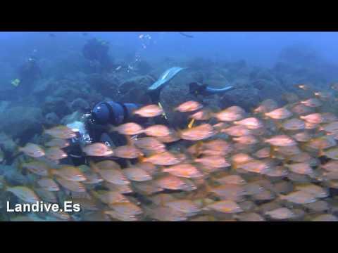 LANDIVE.ES - Inmersion en Los Gigantes 14 8 2010