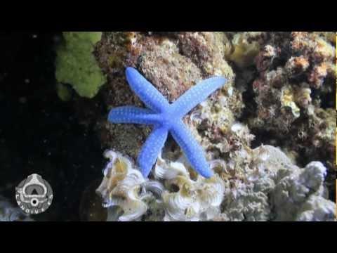 Arrecifes de Senderawasih