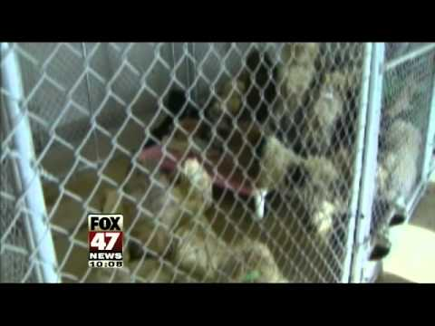 Breeders Face Felony Charges