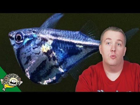 Aquarium Fish Unboxing 2018_Legjobb videók: Akvárium