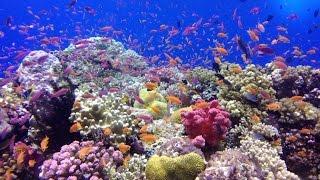 Diving in Savusavu, Fiji