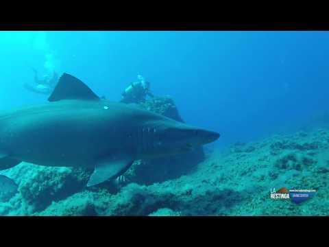 Tiburón Solrayo de nuevo en El Hierro!! Junio 2019