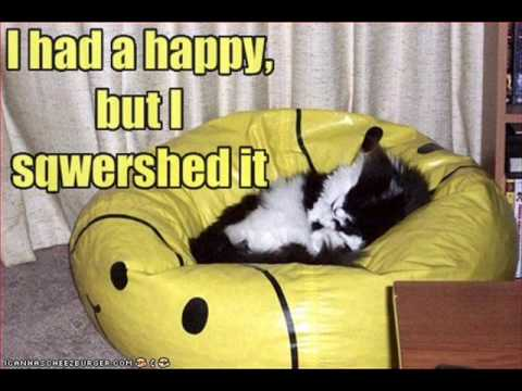 I Can Has Cheezburger - (S02E01) 30 Pictures of Lolcats. Enjoy. Icanhazcheezburger is a website with funny pictures of cats and other animals. Watch to find out more. Song: Come Wit...