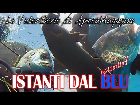 Pescasub Dentice, Sarago e Corvina: Sorprese nella Posidonia - Apnea Magazine