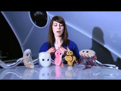 Cool Science - The Great Microbe Debate