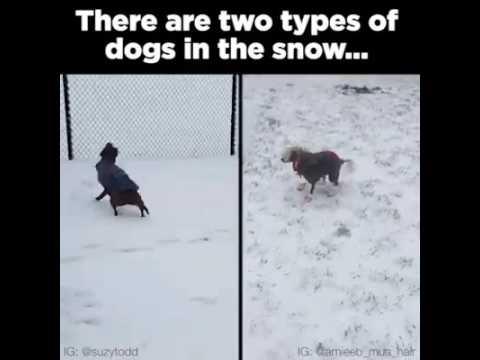 Toiset koirat rakastavat lunta ja toiset inhoavat – katso huvittava video