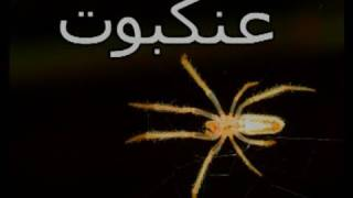 Itsy Bitsy Spider In Arabic: Animals Around Us: Teach Toddlers Arabic DVD: Little Thinking Minds