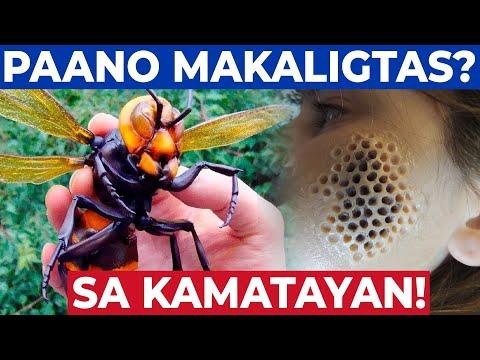10 INSEKTO NA DAPAT MONG IWASAN! Pinaka Delikadong Insekto sa Buong Mundo
