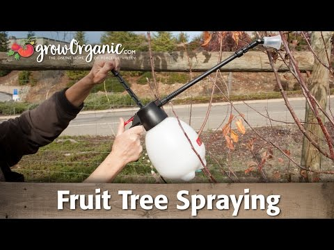Fruit Tree Spraying