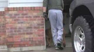 Wygląda jakby po prostu wyprowadzał psa na spacer. Ale prawda która się za tym kryje, wzrusza do łez!