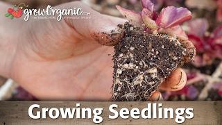 Growing Seedlings