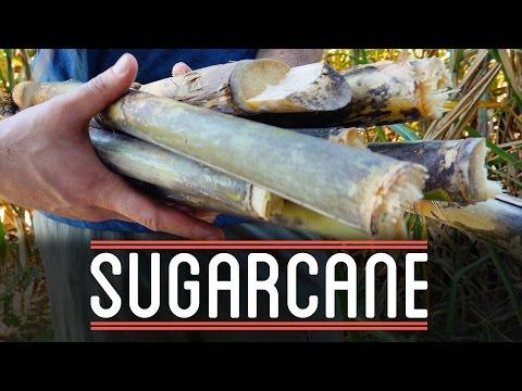 Sugarcane   How to Make Everything: Chocolate Bar