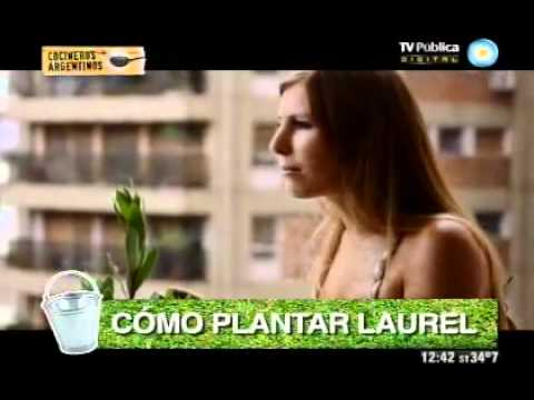 Laurel (capítulo 29, final)