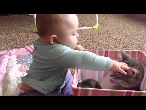 funny animals - Please share on facebook and twitter :) --- Funny Cats Compilation 2014 Funny Cat Videos Ever 2014 Funny Cat Videos 2014 Funny Videos 2014 funny animals 2014 Funny Animal Videos 2014 Funny...