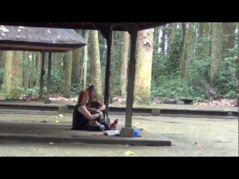 Bali: The Monkeys of Sangeh