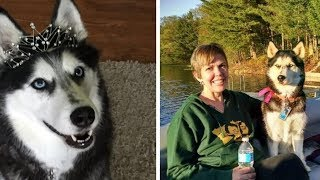 Quick-Thinking Dog Saves Woman's Life After Her Doctor Made A Huge Mistake by Did You Know Animals?