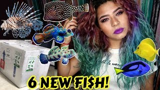 Video UNBOXING THE MOST EXPENSIVE RARE FISH IVE EVER OWNED! (SALTWATER) MP3, 3GP, MP4, WEBM, AVI, FLV September 2019