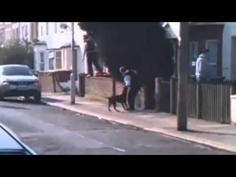 Pitbull ataca e quase mata cinco policiais