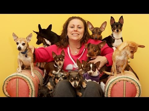 Precious Pups: New York's Chihuahua Rescue Home