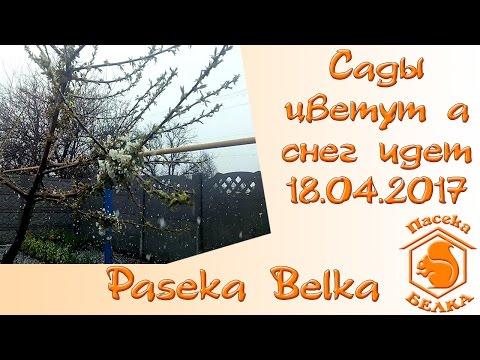Погода в СПб 21.04.2017