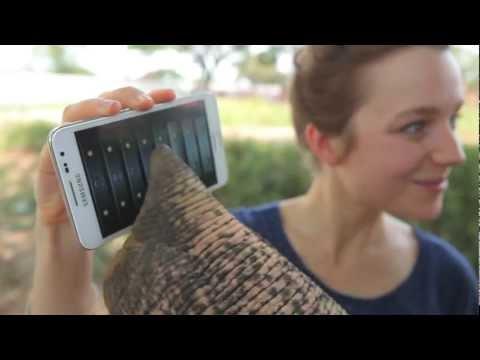 Peter: O elefante que gosta de tecnologia!