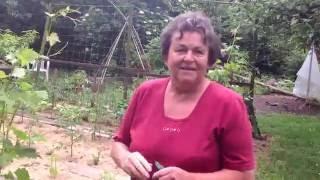 Jutka mama biokertje nyár elején